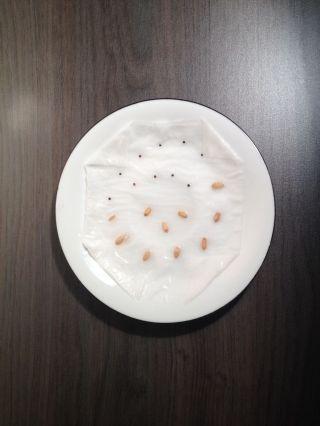 Graines de triticum (grosses graines jaunes) et de sorgho (petites graines noires) sur un mouchoir humide