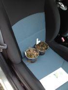 Houblons Strisselspalt et Columbus sur le siège de la voiture, tout juste acheté au printemps 2016