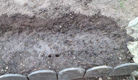 Expérience de jardinage 1 - Planter les graines germées et en semer d'autres