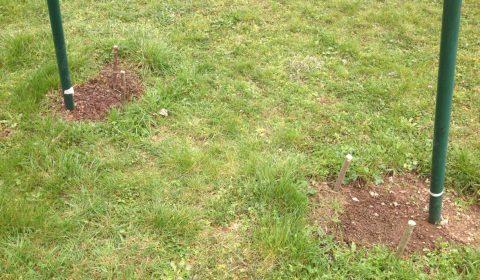 Les houblons plantés à l'automne 2015 ont aussi le droit à leurs piquets de protection