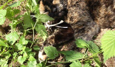 27 mai 2016, le chat me tiens compagnie pendant que je jardine
