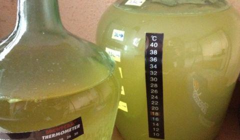 L'hydromel à l'orange à bien bien fermenté, il est déjà bien transparent, il est en avance sur l'hydromel simple
