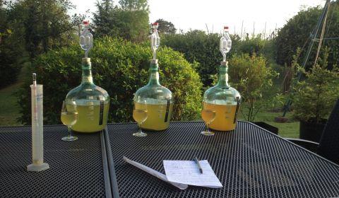 Analyse de la qualité des hydromels artisanaux de la Brasserie du Vallon