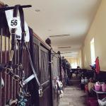 Brass Tacks leather headcollars were a regular sight at Badminton Horse trials 2015