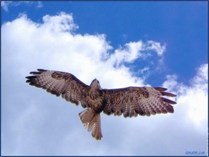 aigle en contre-plongée