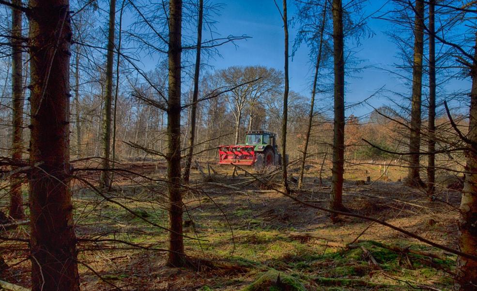 Der arbejdes i skoven 1