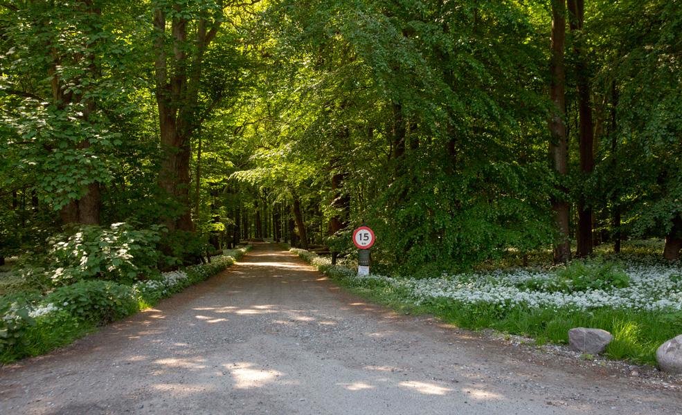 Brattingsborg Skov