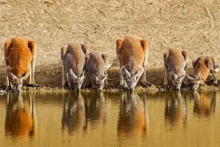 Austrália é o Bicho. Onde encontrar Cangurus na Austrália