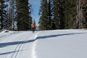 Cross Country Skiing Etiquette: No Mean Dogs