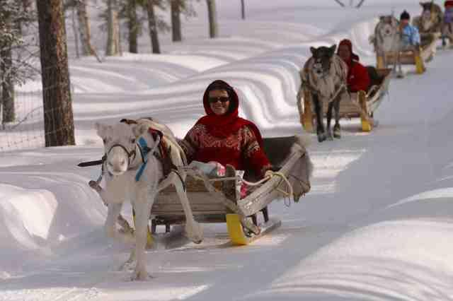 """reindeer """"Ylläs-Lapland, Finland""""."""