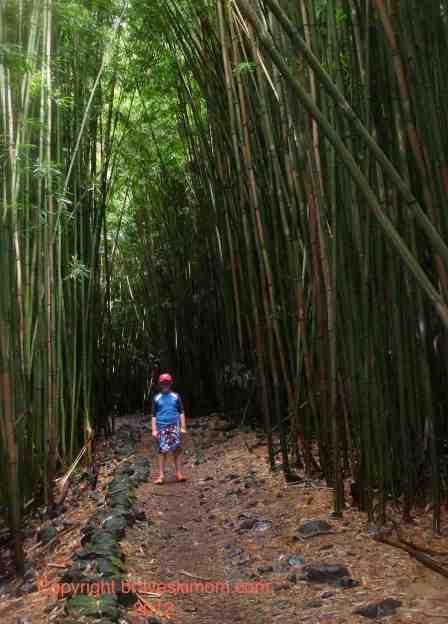 pipiwai bamboo forest maui