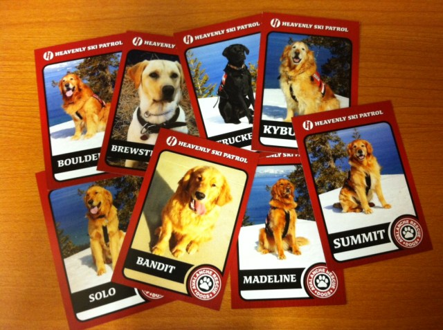 avalanche dog trading cards