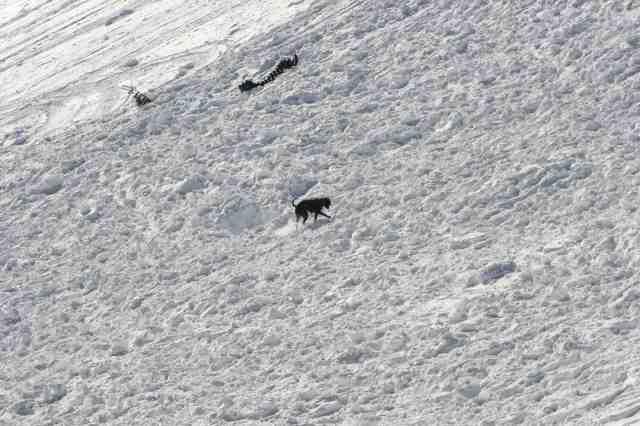 Kenya on snow at Keystone.