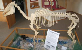 Idaho State Fossil