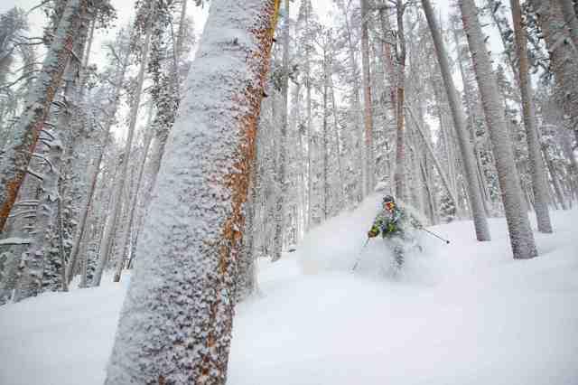 Mary jane tree skiing
