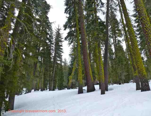 sierra at tahoe red fir tree skiing