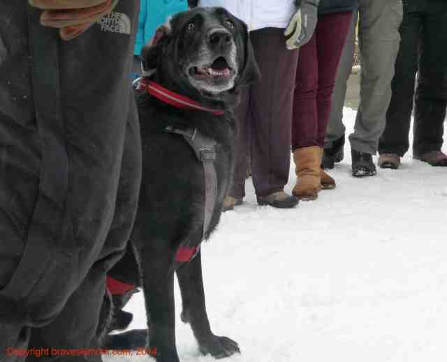 scoop the avalanche dog