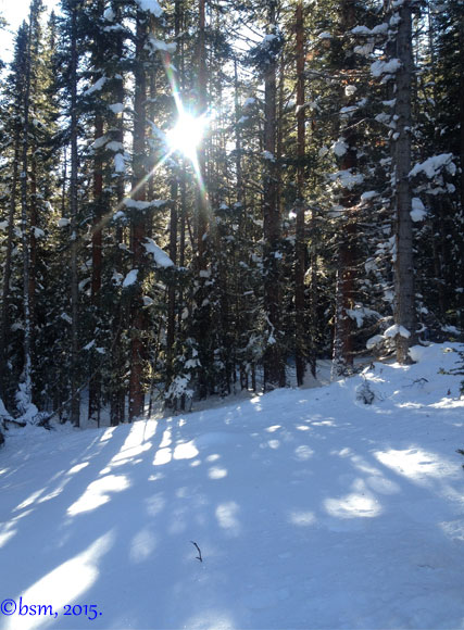 sunlight through the forest snowmass