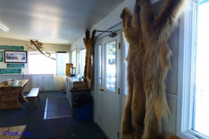 wapiti wildlife center