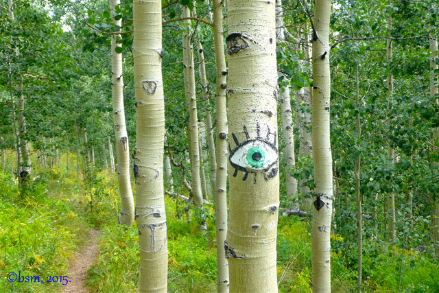 cross country bike trails crested butte mountain resort