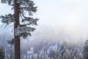 northstar-snowy-trees