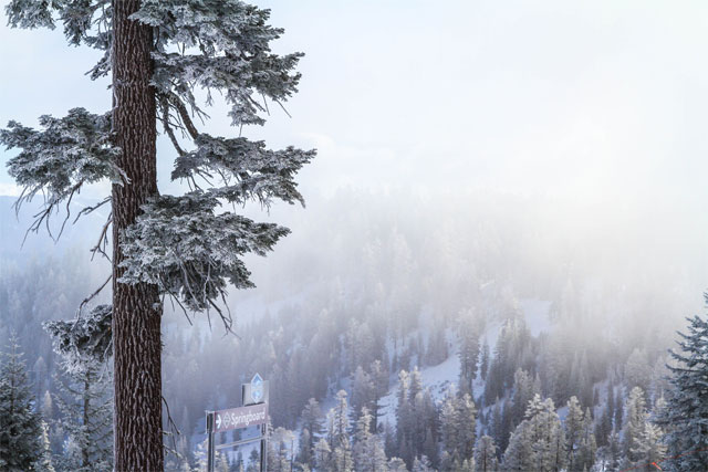 northstar-snowy-trees
