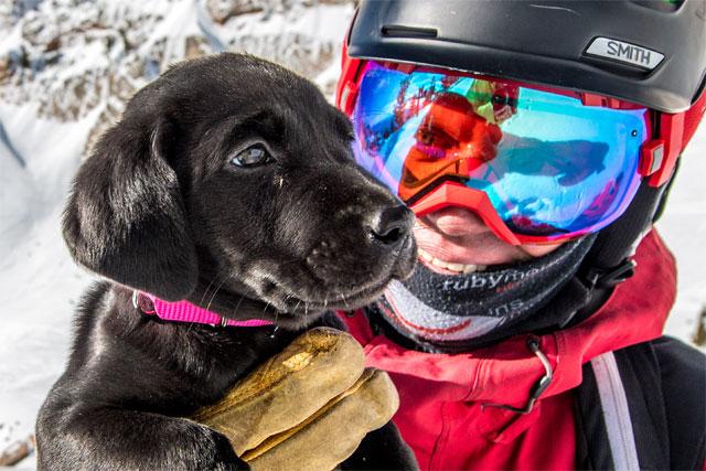snowbasin-avalanche-dog-puppy-slayer