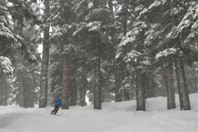 snowstorm-glade-skiing-mammoth