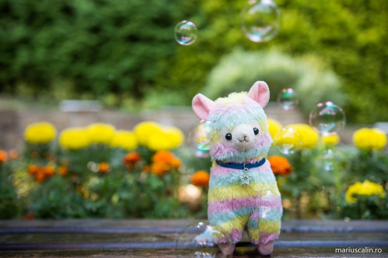 Guest post: Alpaca Amber despre Summer Well 2018