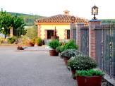 Bodega-Ruiz-Torres-4