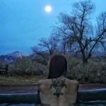 Feral Fox Tattoo. Benton Hot Springs. CA.