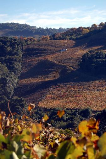 Vineyards at the Wine Valley- RS - photo by Almir Dupont