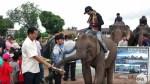 假復育真營利? 中國擬砸12兆保育大象遭質疑不單純