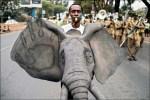 為大象請命 百座城市響應