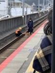 日本電車延誤 鐵道員笑臉談判「障礙物」萌翻網友