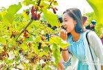 桑椹食療法 補肝益腎營養豐
