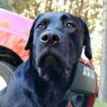 警犬為救人遇難 消防隊為其辦葬禮