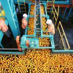 疫情不影響吃飯 前4月巴西食品行業雇員逆勢增加
