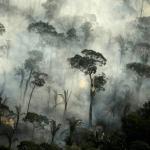 今年上半年巴西亞馬遜森林砍伐量增加25%