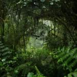 謀殺案受害者「死而復生」 原來這5年都躲在叢林中