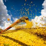 2021—2022年度巴西大豆產量有望創新高