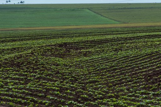 Brazil to lead world in biotech crops: association