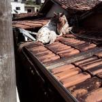 Cavalo sobe em telhado de prefeitura em Minas Gerais