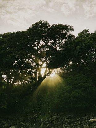 New Chums Sunrise - The Coromandel
