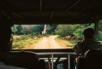 Safari with Leopard Trails - Sri Lanka