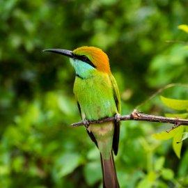 Yala National Park - Sri Lanka