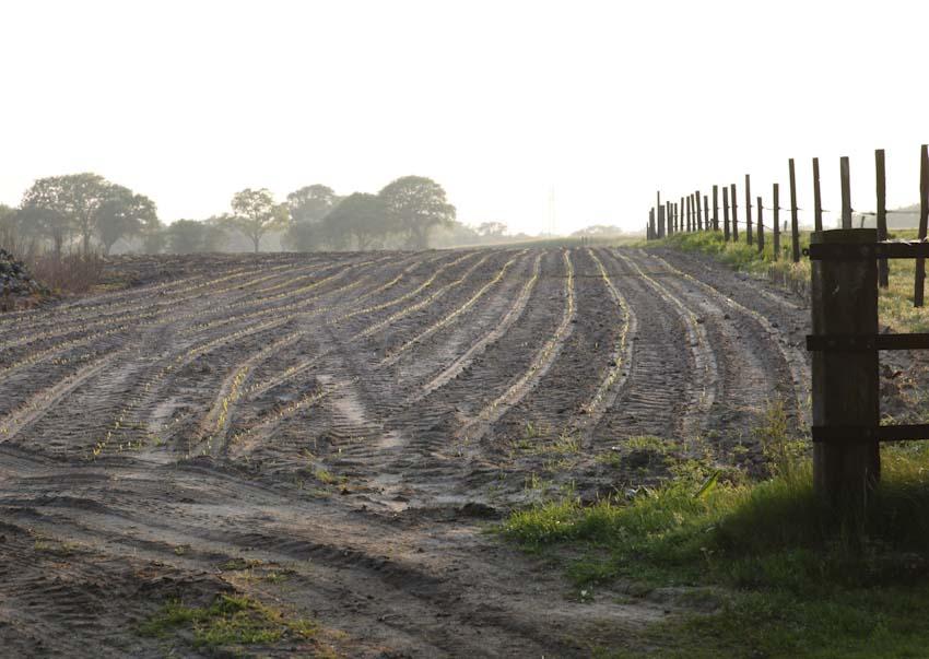 Newly sown field near Großenkneten