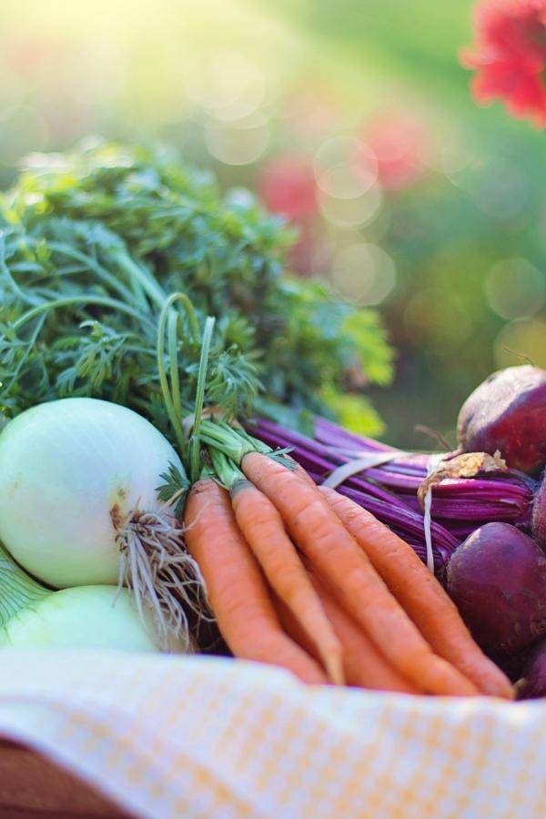 planting a produce garden