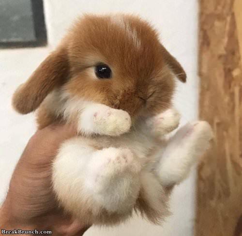 Cute Little Bunny Breakbrunch