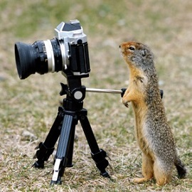 funny cute squirrel Photographer modeling scams